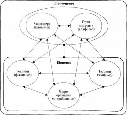 Схема будови біоценозу
