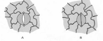 Рис 21 схематичне зображення продиху