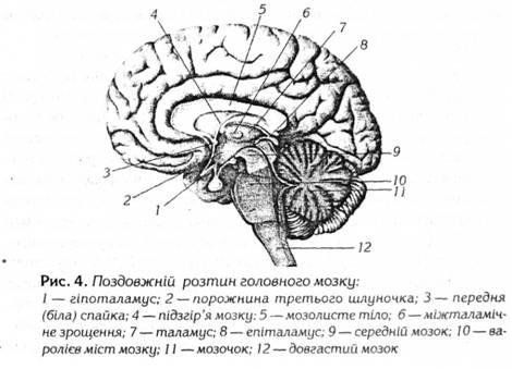 порожниною середнього мозку є