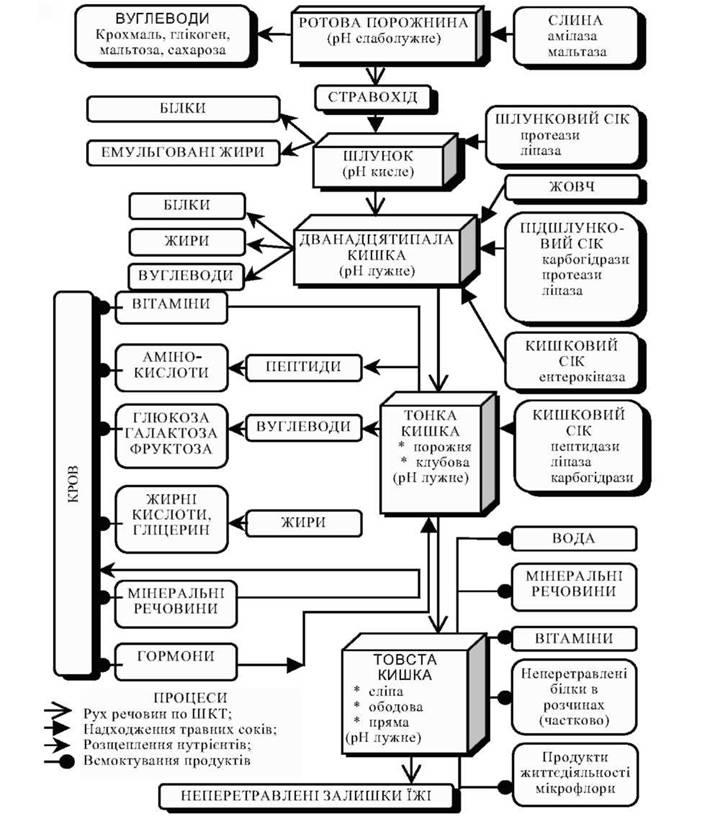 схема процесів травлення