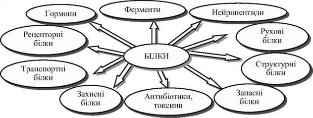Рис 4 1 білкові структури організму